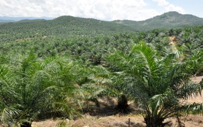 L'huile de palme est-elle autorisée dans les cahiers des charges Bleu-Blanc-Cœur ?