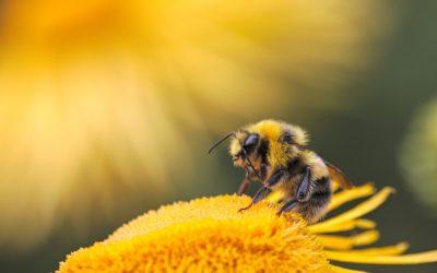 Murielle l'abeille