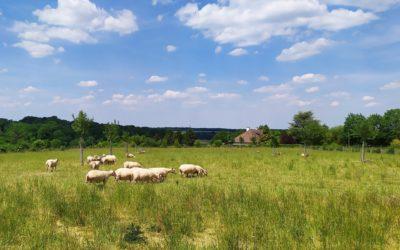 Bleu-Blanc-Coeur vous aide à financer vos projets agroforestiers 🌳