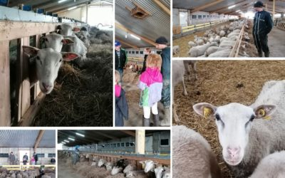 Une ferme Bleu-Blanc-Coeur ouverte pour Noël en Bretagne